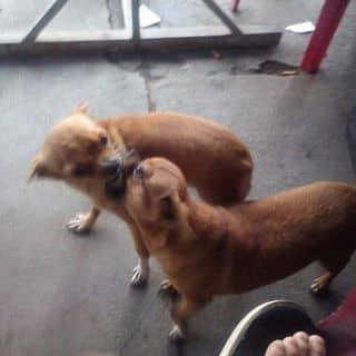 2em poc của masterkasin tại Shop online, Huyện Cam Lâm, Khánh Hòa - 2506132