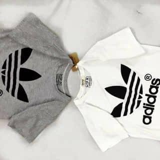 Áo phông adidas của thienquang3579 tại Hà Tĩnh - 811573