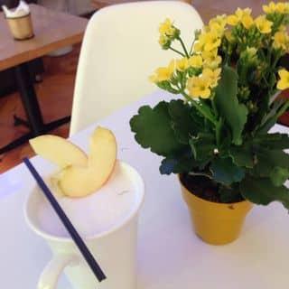 Apple milk tea của skintomax.vltkshxttuy tại 98 Nguyễn Đăng - Suối Hoa - Bắc Ninh, Thành Phố Bắc Ninh, Bắc Ninh - 372106