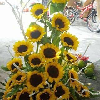 Balo hoa đẹp của lelan35 tại Huyện đảo Lý Sơn, Huyện Lý Sơn, Quảng Ngãi - 921060