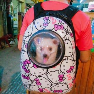 Balo thú cưng của conangdatinhconangdatinh36 tại Hồ Chí Minh - 1900476