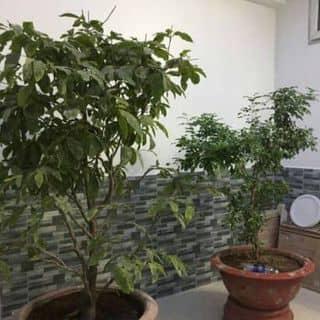 Bán biệt thự giá rẻ của dohoangkim tại Hồ Chí Minh - 2489846