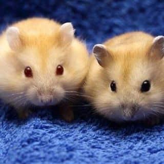 Bán chuột của tthanhphuoc98 tại Trà Vinh - 1140904