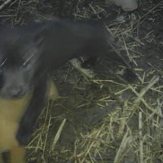 Bán con gấu này của gh8b5 tại Shop online, Huyện Nguyên Bình, Cao Bằng - 2383943