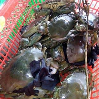 Ban cua bao an của nguyentien584 tại Chợ Minh Lương, tt. Minh Lương, Huyện Châu Thành, Kiên Giang - 1432028