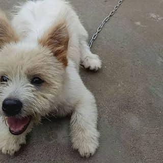 Bán cún này của lylyna3 tại Phủ Lý, Thành Phố Phủ Lý, Hà Nam - 2129300