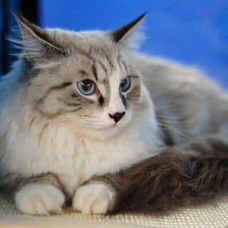 Bán Em Mèo dễ thương xinh xắn đáng yêu của hoangtrinh63 tại Shop online, Huyện Bình Giang, Hải Dương - 2724692