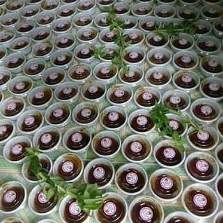 Bánh tráng chấm bên BiMi của tamthanh466 tại Bãi biển Hải Tiến, Huyện Hoằng Hóa, Thanh Hóa - 4711719
