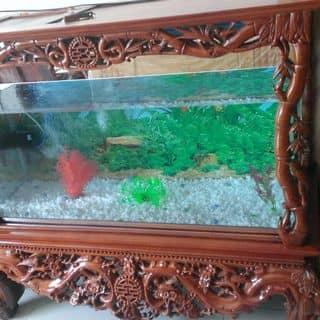 Bể cá của cogaikimcuong tại Thái Nguyên - 1723722