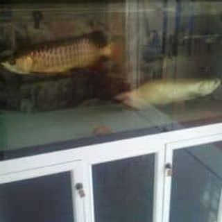 Bể cá của manhbins1 tại Đội Cấn, Trưng Vương, Thành Phố Thái Nguyên, Thái Nguyên - 1976358