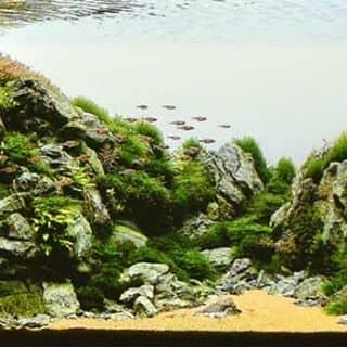Bể cá thủy sinh của thanhtran191 tại Yên Bái - 1227769