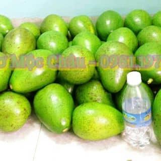 Bơ Mộc Châu (trứng khủng long) của mrthanhtitop tại 0981197113, Thành Phố Móng Cái, Quảng Ninh - 694151