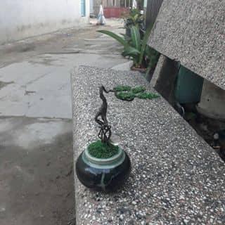 bonsai mini của nhotao3 tại Hồ Chí Minh - 2645351