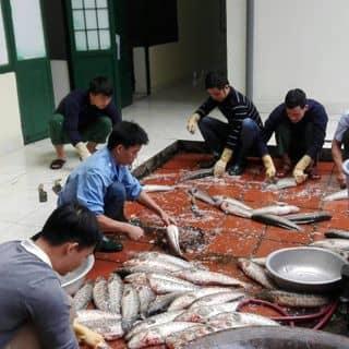 cá quả  của thanhly40 tại Sao Đỏ, Huyện Chí Linh, Hải Dương - 3213702