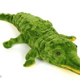 Cá sấu bông của hoaao tại Hà Nam - 1892124