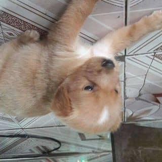 Cần bán bé này của thanhtung1501 tại 57A Tháp Mười, Quận 6, Hồ Chí Minh - 2681637