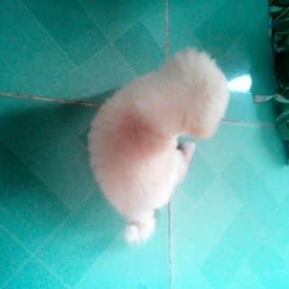 Cần bán chó 52kg ai mua hoq của tuancohos tại Đồng Nai - 1473414