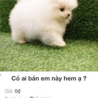 Cần tìm mua chó cưng 1tr đổ về của lethu1202 tại Thái Nguyên - 3340850