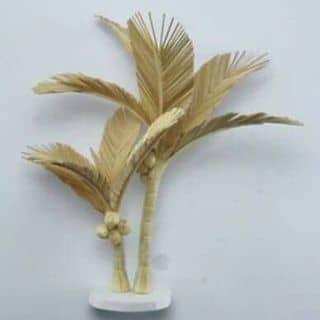 Cây dừa của batnapquantaitimemyeu tại Quảng Nam - 2277589