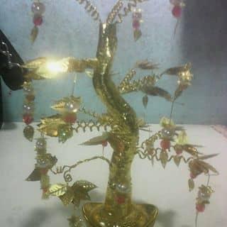 Cây lộc vàng của hanhhanh91 tại Đồng Tháp - 2330991