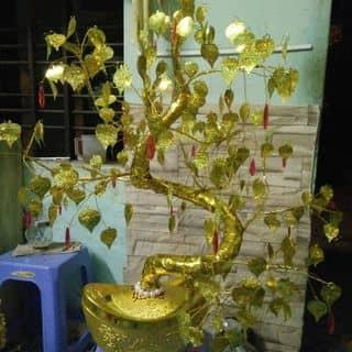 Cây phát tài của khanguyen1985 tại Phú Yên - 2224238