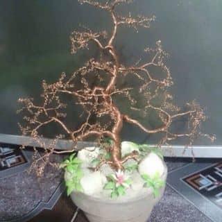 Chậu cây handmade của vinhthe1 tại Quận Thủ Đức, Hồ Chí Minh - 2086212