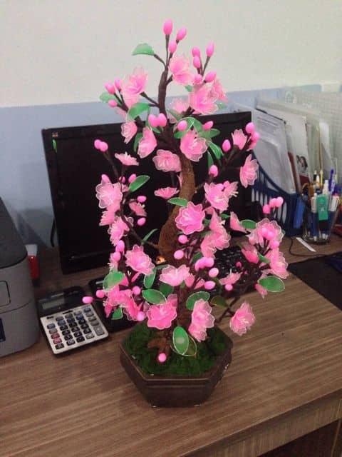 Kết quả hình ảnh cho hoa đào vải voan