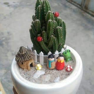 Chậu sen đá mix của socgarden tại Khánh Hòa - 2685654