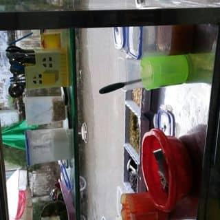 Chè . Sâm bổ lượg của tuyenngoc56 tại 69, 30 Tháng 4, Thành Phố Mỹ Tho, Tiền Giang - 1216764