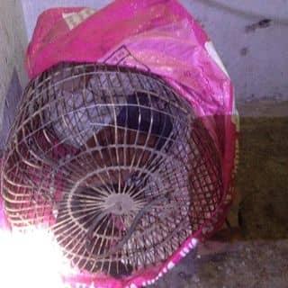 Chim bìm bịp của trungtrieu2 tại Quảng Ninh - 2210549