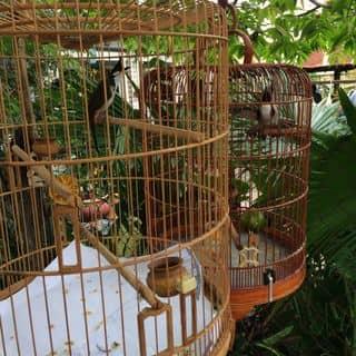Chim chao mao của leduykhongcamxuc tại Hồ Chí Minh - 2761716