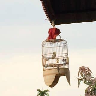 Chim vành khuyên của minhhoang254 tại Vĩnh Phúc - 3182728
