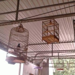 Chim yeu của hyvong16 tại Quảng Bình - 1468852