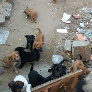Chó của 8340 tại Hồ Chí Minh - 3252086