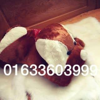 chó bông của tongngoc87 tại Sơn La - 2211833