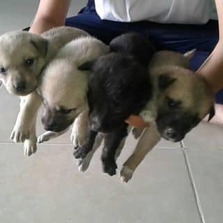 Chó con của minhthii3 tại Shop online, Huyện Cần Đước, Long An - 2219160