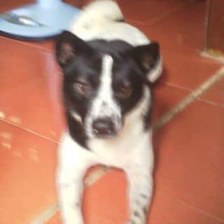Chó dữ của lennysara tại Quang Trung, Thành Phố Quảng Ngãi, Quảng Ngãi - 2197746