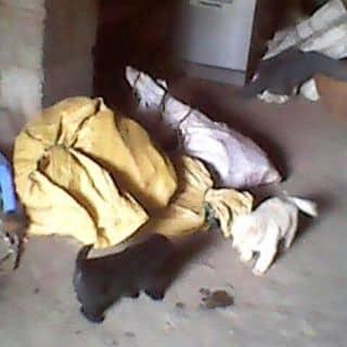 Chó fet ki của dangcaret tại Shop online, Huyện Phú Tân, Cà Mau - 2184871