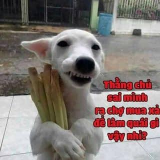 chó hàn quốc của nghingo3 tại Ngã 4 Đồng Xoài, Thị Xã Đồng Xoài, Bình Phước - 1109792