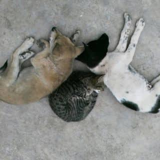 Chó mèo của hoan92 tại Quảng Ninh - 1760610