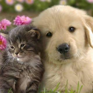 Chó mèo của van194 tại Shop online, Quận Bình Thủy, Cần Thơ - 1021386