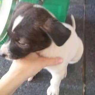 Chú cún  của kittyssuheo tại Đắk Lắk - 3178131