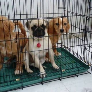 Chuồng chó sơn tĩnh điện xếp gọn được của hoang_vy123 tại Hồ Chí Minh - 2771813