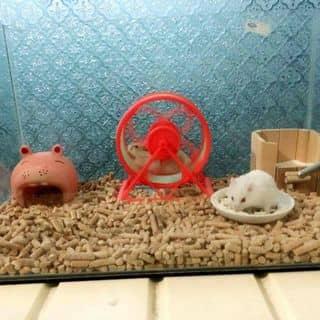 Chuột hamster của huynhhoa30 tại 69, 30 Tháng 4, Thành Phố Mỹ Tho, Tiền Giang - 2071457