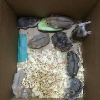 Chuột hamster của huynhhoa30 tại 69, 30 Tháng 4, Thành Phố Mỹ Tho, Tiền Giang - 2119463