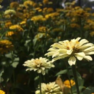 Chụp đẹp của boylazyq tại Hồ Chí Minh - 2082420