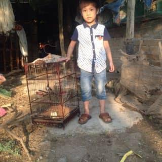ckao mao dinh của thjnkdeptrai tại Bắc Ninh - 2393869