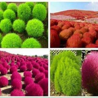 cỏ đổi màu của thuocphukhoa tại Phố Bùi Chu,  Xã Xuân Ngọc, Huyện Xuân Trường, Nam Định - 1246936