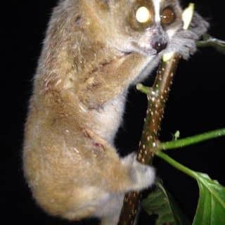 Combo động vật hoang dã của duyhau11 tại Bắc Ninh - 2858541