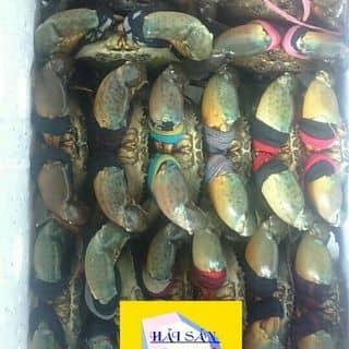Cua cà mau của kienkenny tại 4 - 6 Hoàng Văn Thụ, Thị Xã Bạc Liêu, Bạc Liêu - 1461411